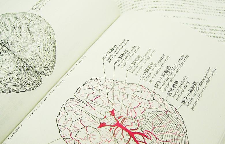 脳が原因で片付けできない!?片付けに関わる障害について