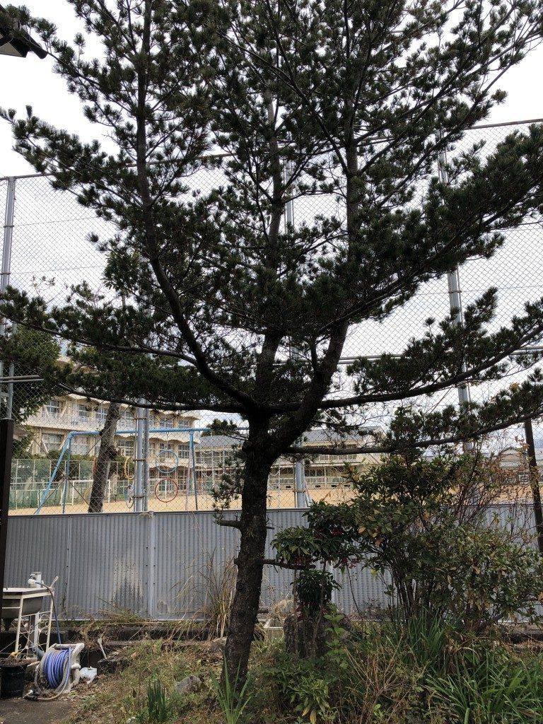 【高知市朝倉本町】庭木の剪定のご依頼☆仕事の都合に合わせた日程で見積もり兼作業の柔軟な対応だったとお喜びいただけました。