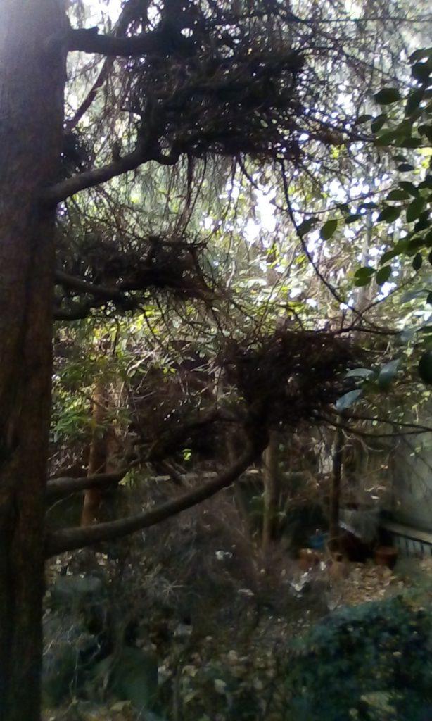 【長崎市曙町】庭木の伐採のご依頼 お客様の声