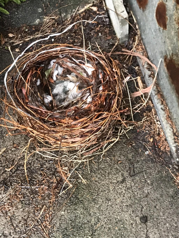 【青森市】カラスの巣の撤去作業のご依頼 お客様の声