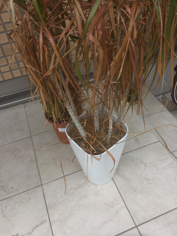 【静岡市葵区】片付けのお手伝いと植木の回収処分ご依頼 お客様の声