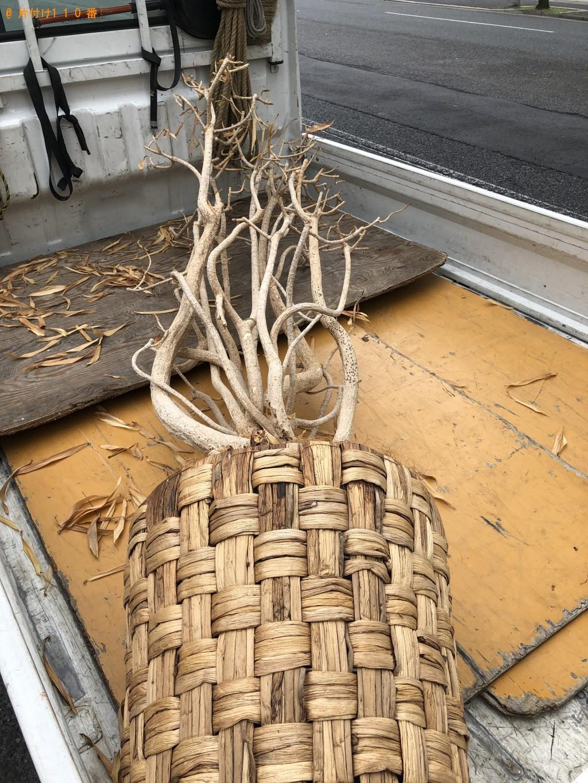 【京都市左京区】観葉植物の回収処分 お客様の声