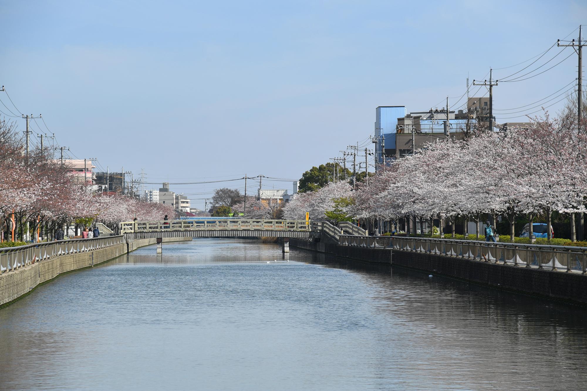 【完全保存版】江戸川区のゴミ回収方法|一般・粗大ゴミ全マニュアル