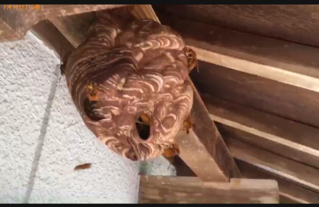 二階の軒下のスズメバチの巣の駆除