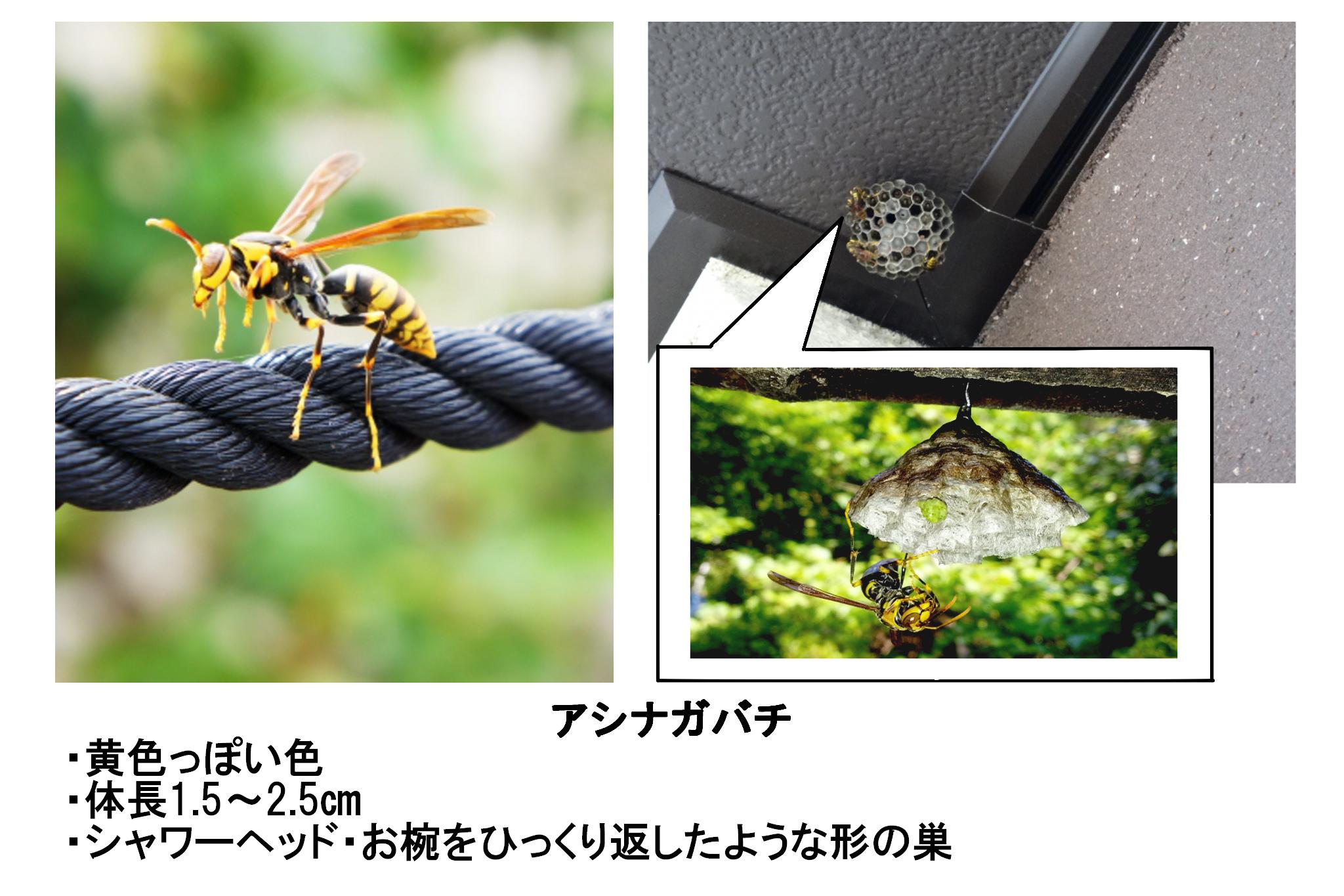 アシナガバチ
