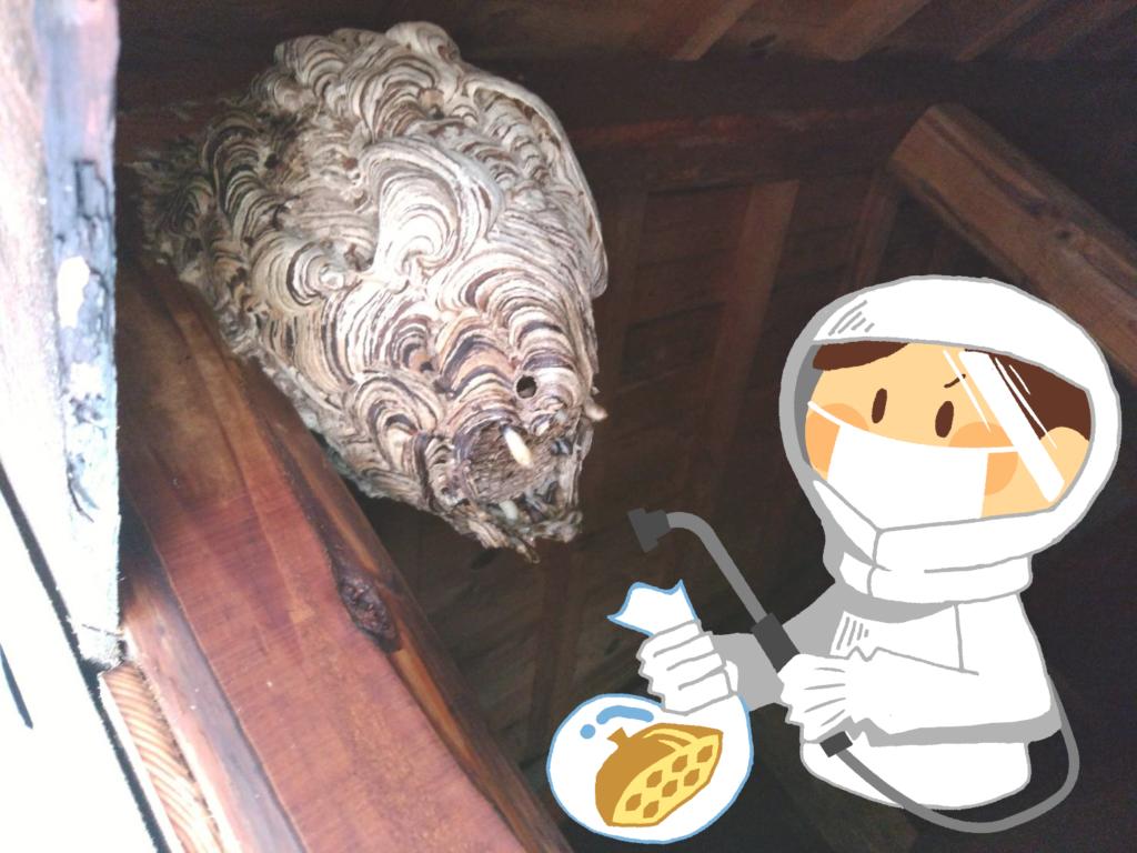 正しく安全に!初めてでも!蜂・蜂の巣駆除の方法を解説【完全版】