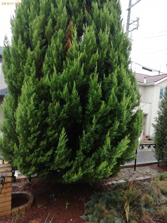 伐採・伐根・木の処分