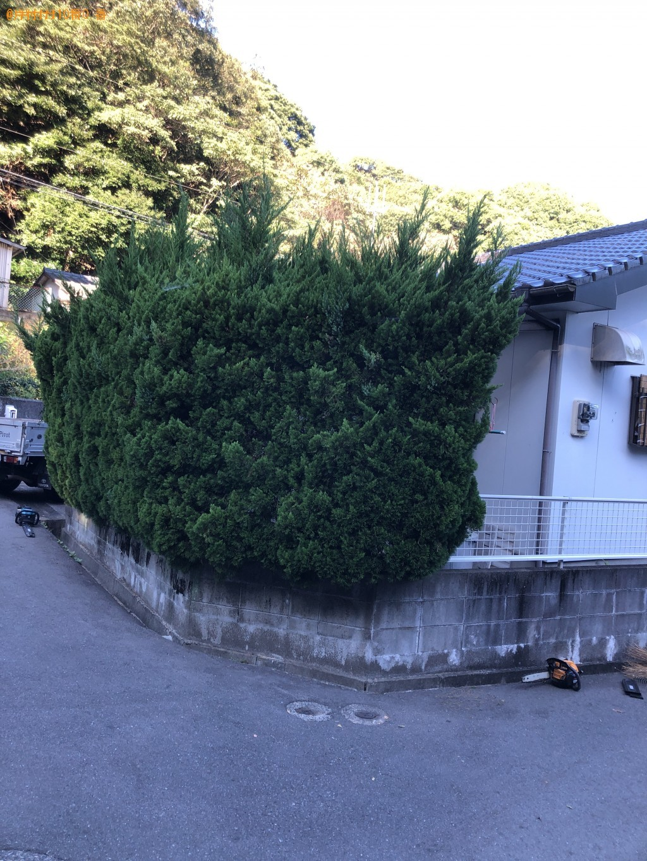 12本の木の剪定