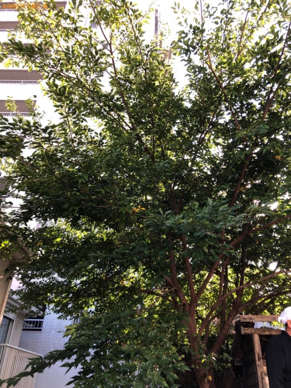 複数枝が伸びた木の剪定