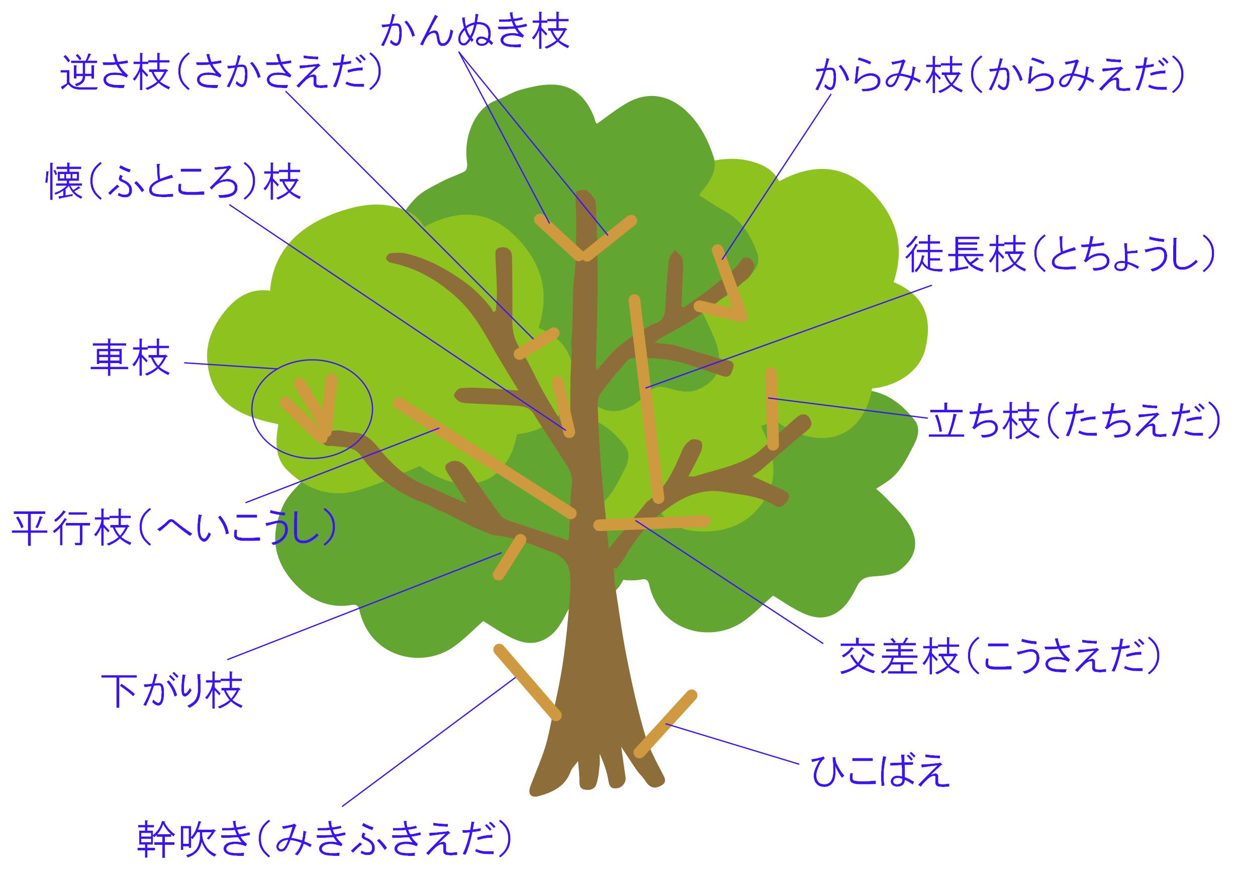 切った方がいい枝を見分けるコツ